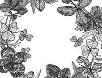 Von Hand gezeichnete grafische Kleeblumenillustration Gemaltes botanisches drei-leaved Wiesengras, lokalisiert auf weißem Hinterg vektor abbildung