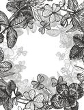 Von Hand gezeichnete grafische Kleeblumenillustration Gemaltes botanisches drei-leaved Wiesengras, lokalisiert auf weißem Hinterg lizenzfreie abbildung