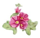 Von Hand gezeichnete rosa Malvenblumen Stockbild