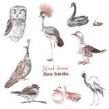Von Hand gezeichnete Skizze von Vögeln eines Zoos lizenzfreie abbildung