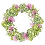 Von Hand gezeichneter Aquarellkranz von Blumen der Rotklee- und Blattillustration Gemalte botanische drei-leaved Wiese stock abbildung