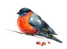Von Hand gezeichneter Rotkehlchenvogel Stockbild