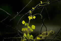 Von hinten beleuchtete Blätter spät am Abend Lizenzfreies Stockfoto