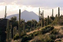 Von hinten beleuchtete Wüsten-Szene Stockbild