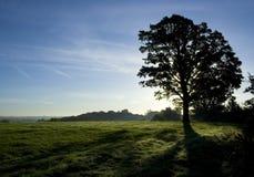 Von hinten beleuchteter Baum Stockfotografie