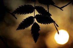 Von hinten beleuchteter Zweig am Sonnenuntergang Lizenzfreie Stockfotos