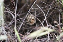 Von ihrem Nest zu errichten Papierwespen, stockfoto