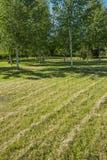 Von links nach rechts verlaufende Diagonalen des getrimmten Rasengrases Stockfotografie
