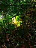 von Natur aus camoflaged stockbilder