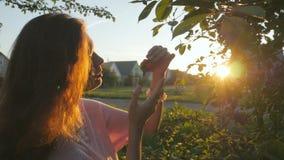 von riechenden Blumen der jungen Frau auf dem Gebiet während des Sonnenaufgangs in der Landschaft stock video footage
