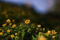 Von Waldblumen im Frühjahr blühen stockfotos