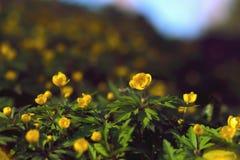 Von Waldblumen im Frühjahr blühen lizenzfreie stockbilder
