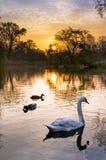 Vondelpark sunrise birds Stock Photos