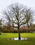 Vondelpark winter photo Holland Royalty Free Stock Image