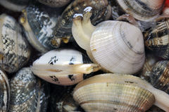 Vongole Foto de Stock Royalty Free