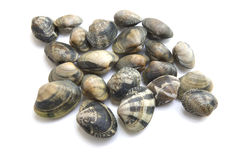 Vongole Royalty Free Stock Photos