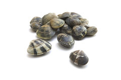Vongole Royalty Free Stock Image