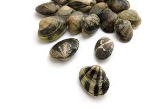 Vongole Royalty Free Stock Images