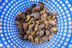 Vongole crude da vendere ad un mercato ittico Fotografia Stock Libera da Diritti
