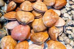 Vongole fresche al mercato ittico Fotografie Stock