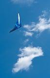 Vont la mouche un cerf-volant Image libre de droits