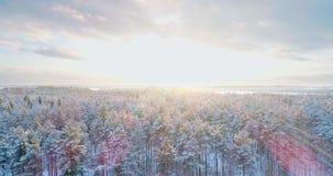 Voo aéreo acima da floresta do inverno video estoque