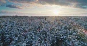 Voo aéreo acima da floresta do inverno em 4K filme