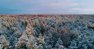 Voo aéreo acima da floresta do inverno em 4K vídeos de arquivo