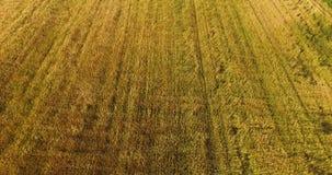 Voo aéreo acima do campo de trigo video estoque