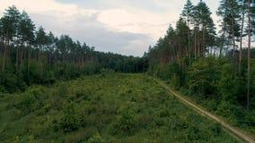 voo aéreo da metragem do zangão 4K na floresta sobre árvores novas vídeos de arquivo