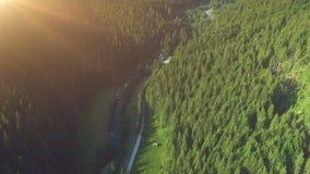 Voo aéreo do zangão sobre a floresta da montanha do pinheiro video estoque