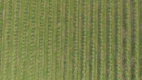 Voo aéreo sobre o campo verde da planta das árvores de maçã video estoque