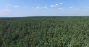 Voo acima da floresta conífera verde filme