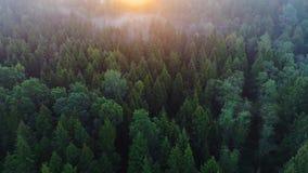 Voo acima da floresta verde em horas de verão filme