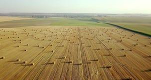 Voo acima do campo dourado dos pacotes do feno segado Colheita reta surpreendente do plano e campo agrícola da palha dourada vídeos de arquivo
