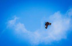 Voo alemão da águia Imagens de Stock