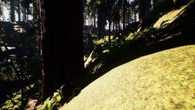 Voo através das árvores de floresta ensolaradas bonitas ilustração do vetor