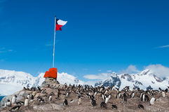 Voo baixo chileno da bandeira da Antártica Imagens de Stock