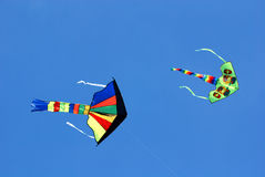 Voo colorido dos papagaios Imagem de Stock Royalty Free