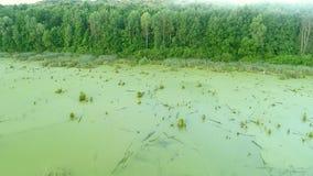 Voo da ecologia da poluição de água sobre o pântano verde video estoque