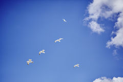Voo da formação da gaivota no céu azul imagem de stock
