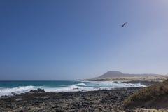 Voo da gaivota com contexto obscuro da montanha na praia F de Corralejo Imagens de Stock Royalty Free