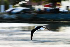 Voo da gaivota em Saquarema - Rio de janeiro - Brasil Imagem de Stock Royalty Free