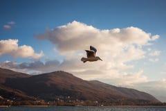 Voo da gaivota no céu azul imagens de stock royalty free