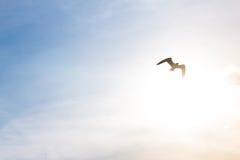 Voo da gaivota no fundo crepuscular Fotografia de Stock