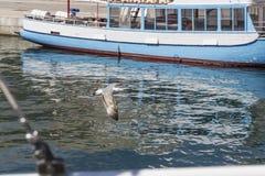 Voo da gaivota no porto fotografia de stock royalty free