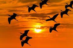 Voo da silhueta do pássaro fotos de stock royalty free