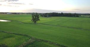 Voo da vista aérea sobre os campos de almofada vídeos de arquivo