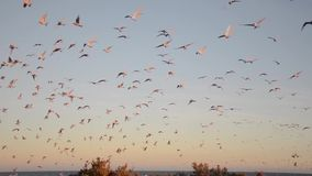 Voo das gaivotas argentina vídeos de arquivo