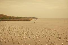 Voo das gaivotas excedente ou subir sobre o mar no por do sol Imagens de Stock